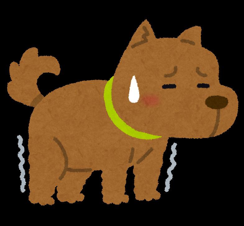 足の弱った犬