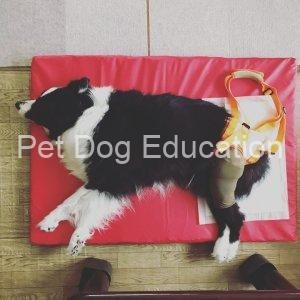 Petio Care Harness Hind Legs Use
